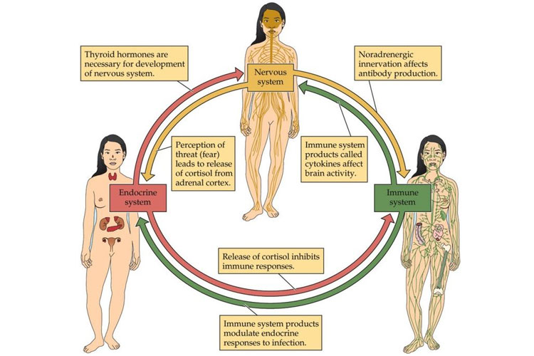 Immune System, Nervous System, and Overall Health